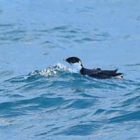 日没の海で鳴き声が - TACOSの野鳥日記