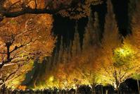 神宮銀杏並木のライトアップ - ルンコたんとワタシの心模様