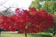 昭和記念公園紅葉3 - 生きる。撮る。