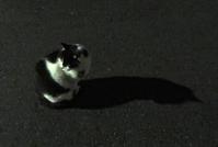 夜のトメとミケちゃん報告 - にゃルニア日記