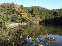 はや、11月も最終日/ 野鳥たち - 千葉県いすみ環境と文化のさとセンター