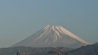 11月30日、今日の我が家から見た富士山と八朔(はっさく) -   心満たされる生活