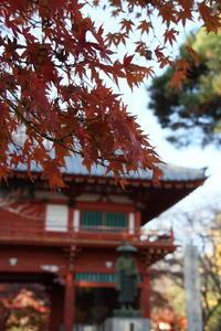 清水公園の紅葉 - 四季の色 -Colors of the Four Seasons