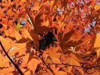 薬師池公園の紅葉 - 散歩ガイド