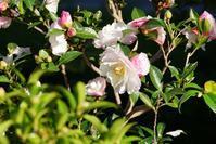 長居植物園の秋の花々(1)@2018-11-24 - (新)トラちゃん&ちー・明日葉 観察日記