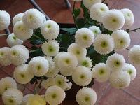 11月最終日 - フラワーショップデリカの花日記