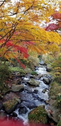 熱海梅園の紅葉🍁足湯 - 木のこのこ