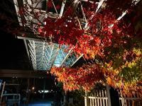 明日から師走・・・・ - 岐阜県 門塀・庭・車庫 エクステリア専門店アーステック