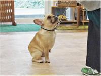 犬のしつけ方教室11/29 - SUPER DOGS blog