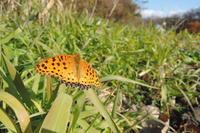 晩秋の陽光 - 蝶の縁