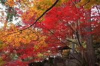 崇禅寺 再訪 (撮影日:2018/11/26) - toshiさんのお気楽ブログ
