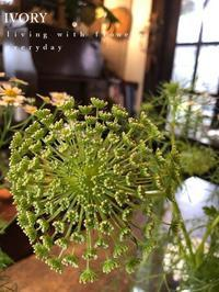 『〜IVORY お正月 花教室12 開催です~♬』 -  Flower and cafe 花空間 ivory (アイボリー)