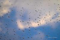 雨上がりの朝 - BobのCamera