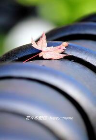 晩秋の紅葉 - 花々の記憶    happy_momo