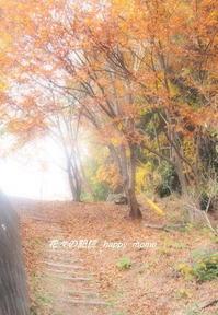 秋深まる里・・ - 花々の記憶    happy_momo