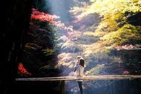 小國神社紅葉#1 - 長い木の橋