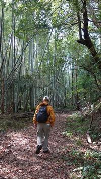 久々の三重県へ⑥熊野古道へ… - ハチドリのブラジル・サンパウロ(時々日本)日記