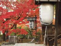 紅葉めぐり2018~真如堂~(11/25) - ばってらの放浪季