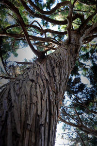 苦悩する樹 - 写真画廊 ナカイノブカズ 2