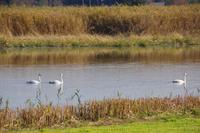 多々良沼の休日 - 季節の風を追いかけて