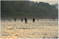 落ち鮎漁解禁 - ハチミツの海を渡る風の音