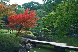 江東区 清澄庭園と清澄公園の紅葉1 - 写真とパピオン大好き3