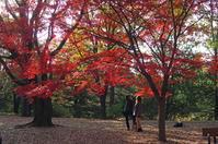 昭和記念公園紅葉4 - 生きる。撮る。