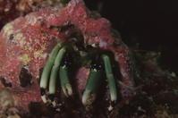 18.12.1平成最後の12月、スタート - 沖縄本島 島んちゅガイドの『ダイビング日誌』