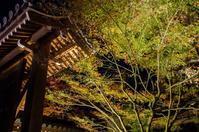 永観堂・南禅寺・高台寺の紅葉 ⑤ - 写真の散歩道