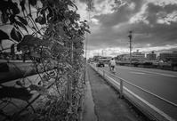 北風が突き抜ける農学部跡の仮設フェンス - Film&Gasoline