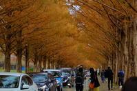 マキノ高原のメタセコイア並木 - nyan5 blog