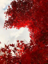 紅葉 - てのひら日記