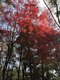 春日山 - 花咲く俳句日誌