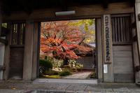 広寿山福聚寺の紅葉 - ライカとボクと、時々、ニコン。