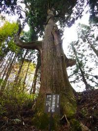 御岳山の天狗の腰掛け杉 - tokoya3@