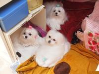 12月もノミ・マダニ予防駆除は忘れずに!! - カミュウ動物病院BLOG/横須賀市久里浜の動物病院