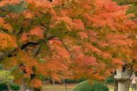 晩秋の輝き - PhotoWalker*