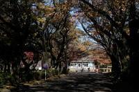 江戸東京たてもの園 - 錦眼鏡