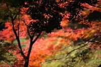 東京の紅part3小石川後楽園2018 - 「せ」の写真集 刹那の光