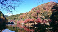 Birds and autumn leaves hike in Oku-musashi - Hike in and around Tokyo