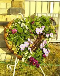 今日の庭♪ - henda  マイライフⅡ