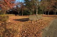落ち葉のベンチ - 風の彩り-2