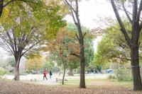 公園の秋の風景〜前編 - 柳に雪折れなし!Ⅱ