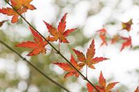 公園の秋の風景〜後編 - 柳に雪折れなし!Ⅱ