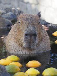 12月2日(日)有休消化 - ほのぼの動物写真日記