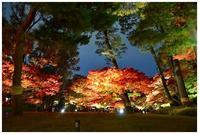 大田黒公園ライトアップ2018 -  one's  heart