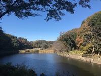 泉の森~ふれあいの森 - つれづれ日記