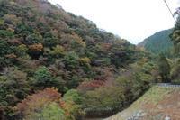 西丹沢の晩秋 - 野山の花たち