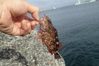 城ケ島で釣り - 今日もどこかでスナフキン