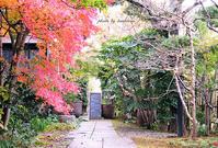 irodori(静岡県田方郡函南町) - Photographie de la couleur